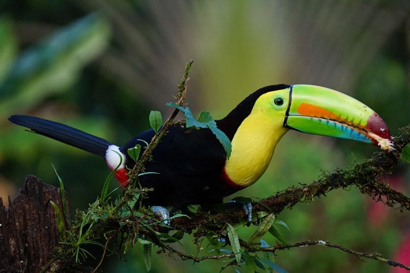Voyages-Autentiques-Costa-Rica