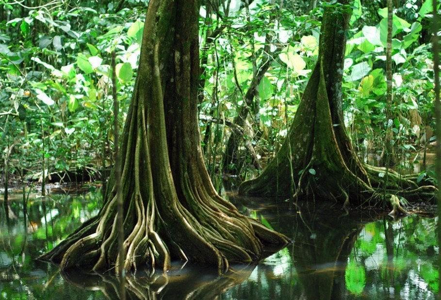arbres du Costa Rica