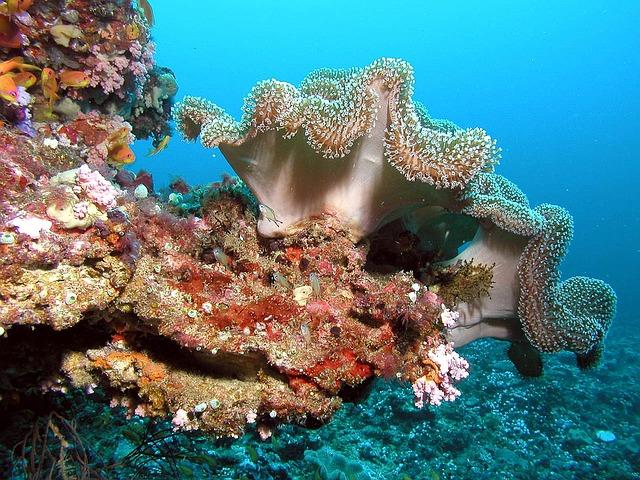 le corail