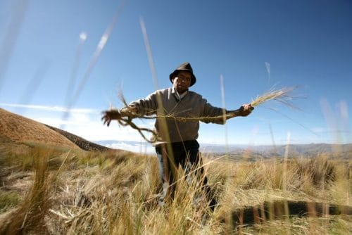 travaux agricole sur le Lac titicaca