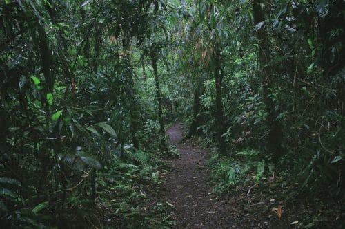 chemin jungle
