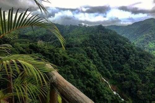 Observer le Quetzal au Costa Rica