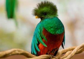 petit quetzal