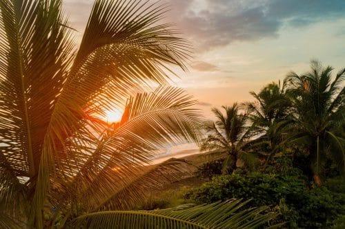 palmiers et coucher de soleil