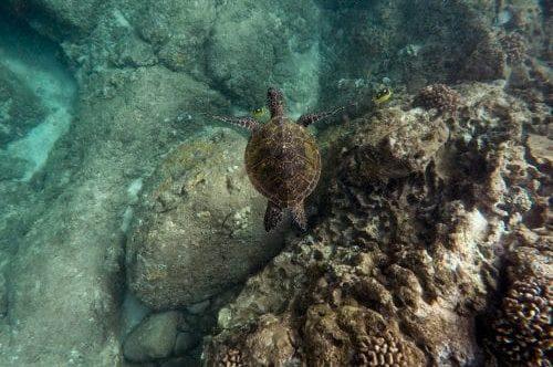 tortue sur la plage