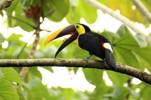 Que faire à Monteverde