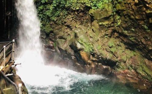 Cascade Oropendola