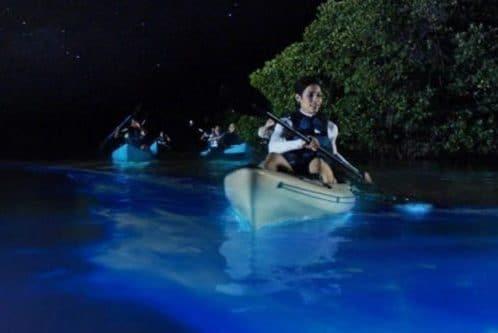 kayak et bioluminescence