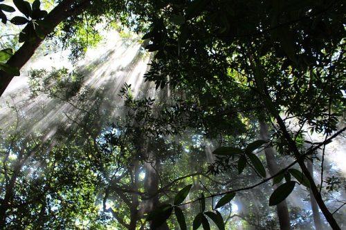 jungle du Costa Rica