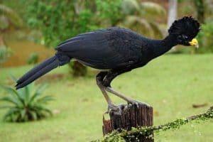 grand hocco Costa Rica