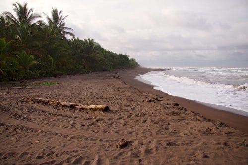 plage de tortuguero