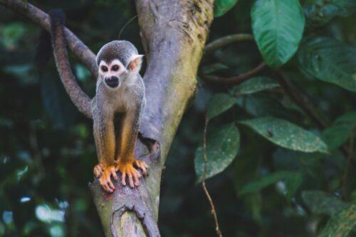 Observer les animaux au Costa Rica